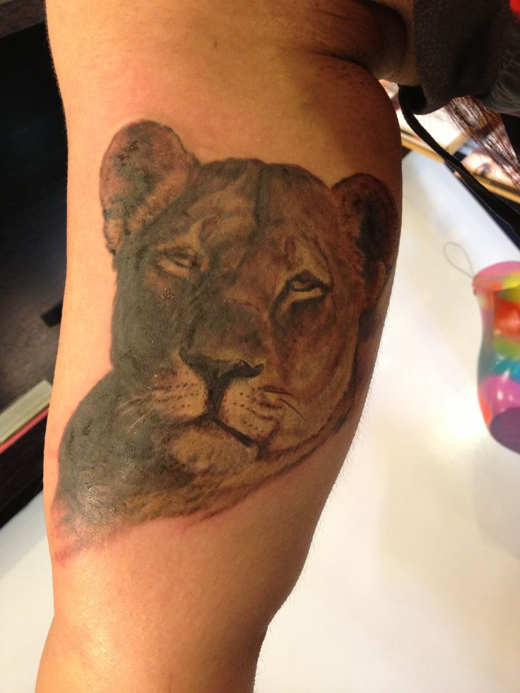 fresh ink lioness by mikey tattoos
