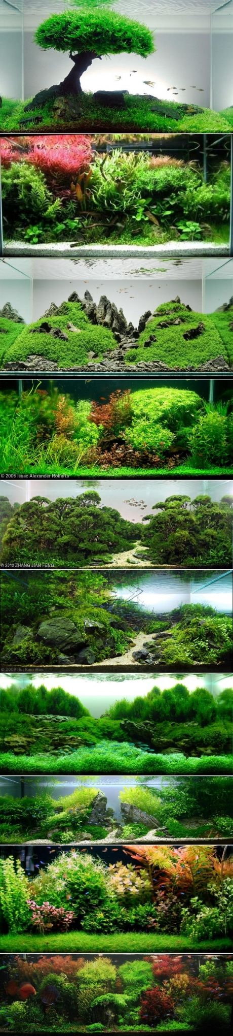 Awesome aquascaping