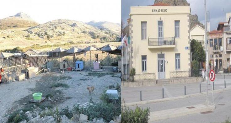 Λήμνος : Καταγγελία Στο Δήμο – Tα Αδέσποτα Θα Μεταφέρονται Πλέον Έξω Απο Το Δημαρχείο.http://goo.gl/TTfQcz