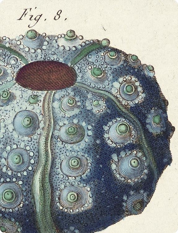 Tableau Encyclopédique et Méthodique des Trois Regnes de la Nature  Paris 1791-1798