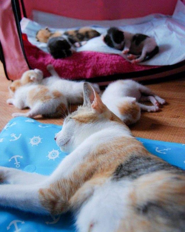 もうすぐ産まれる 家に入れて 庭に現れた三毛猫 お腹が大きくなってきたら態度一変 急に甘えるように まいどなニュース 猫 お腹 三毛猫 猫