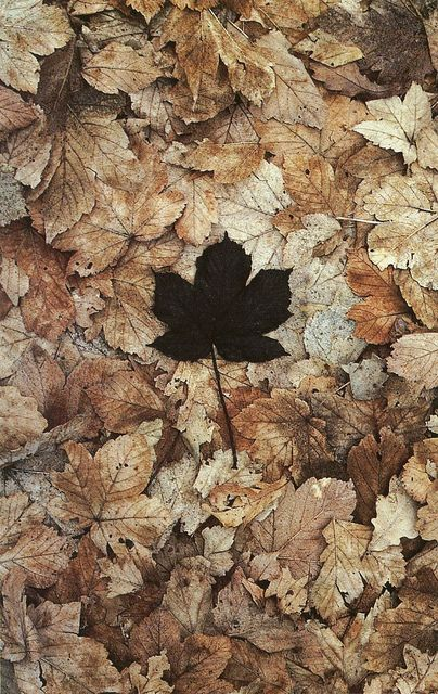 The last perfect leaf: Fall Leaves, Autumn Leaves, Autumn Fall, Black Leaf, Girls Fashion, Andy Goldsworthy, Girls Shoes, Natural, Photography
