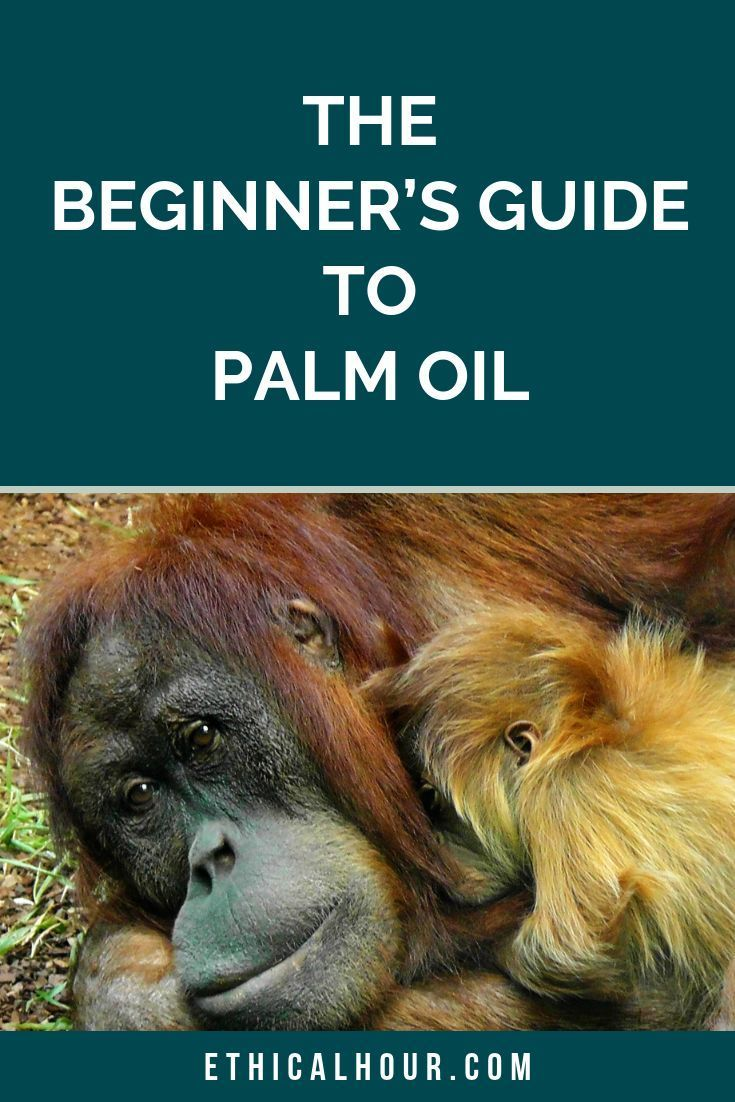 25 Ethical Consumer Magazine The Beginner S Guide To Palm Oil Ethical Hour Ethical Consumer Ethics Eco Friendly Inspiration