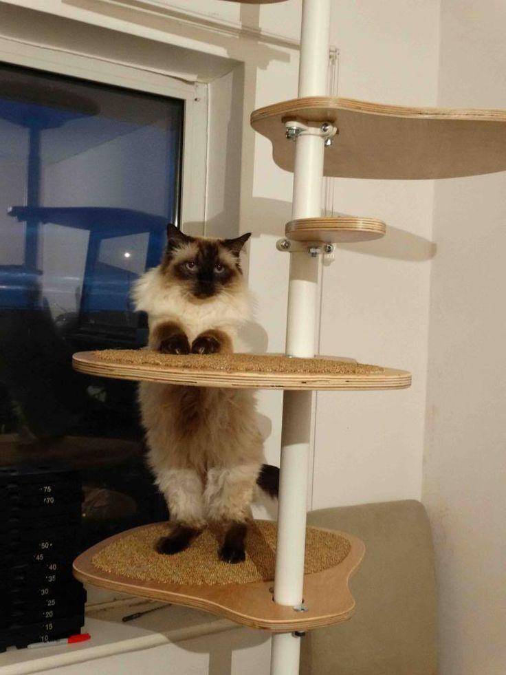 17 best images about inspirace ikea cat stolmen on pinterest cat shelves cats and ikea hacks. Black Bedroom Furniture Sets. Home Design Ideas
