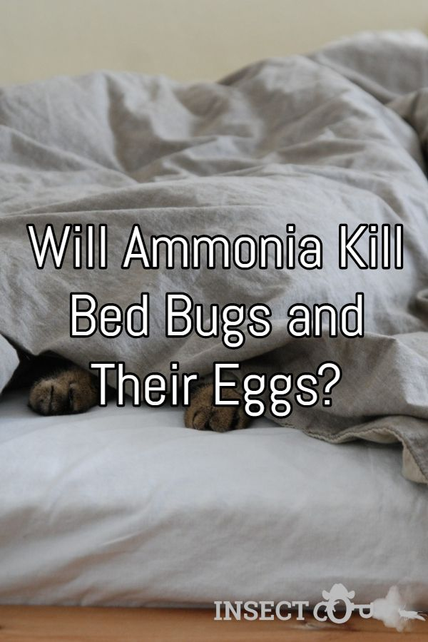 Will Ammonia Kill Bed Bugs And Their Eggs Insect Cop Kill Bed Bugs Bed Bugs Bed Bug Control