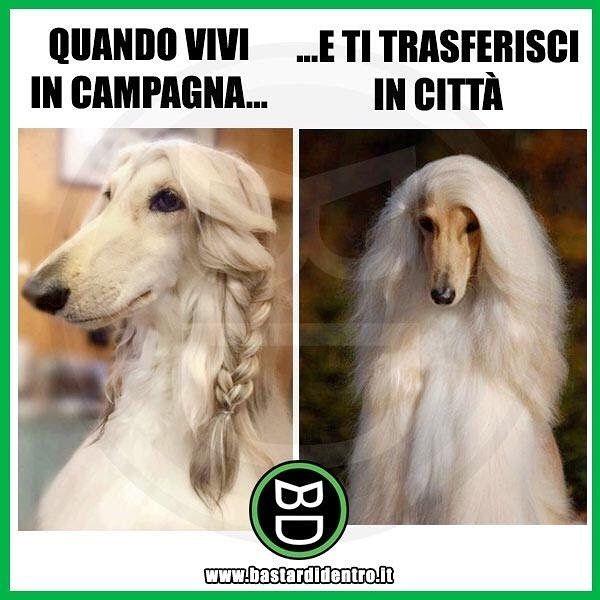 ⭕️ BD è anche su YT! #cane #cani #città #campagna #bastardidentro www.bastardidentro.it
