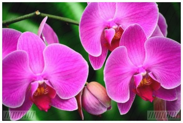 Hintergrundbilder der Natur, Blumen und Orchideen