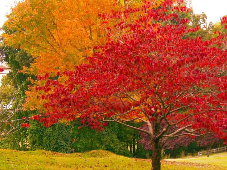Orange And Red Fall Tree Leaves Oranges Autumn Trees
