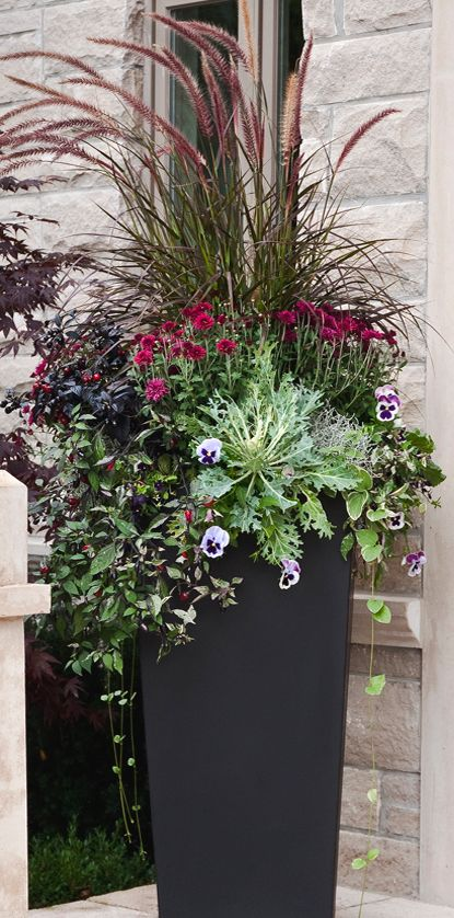 ADD LUSHNESS WITH SHOWY PLUMES & FOLIAGE