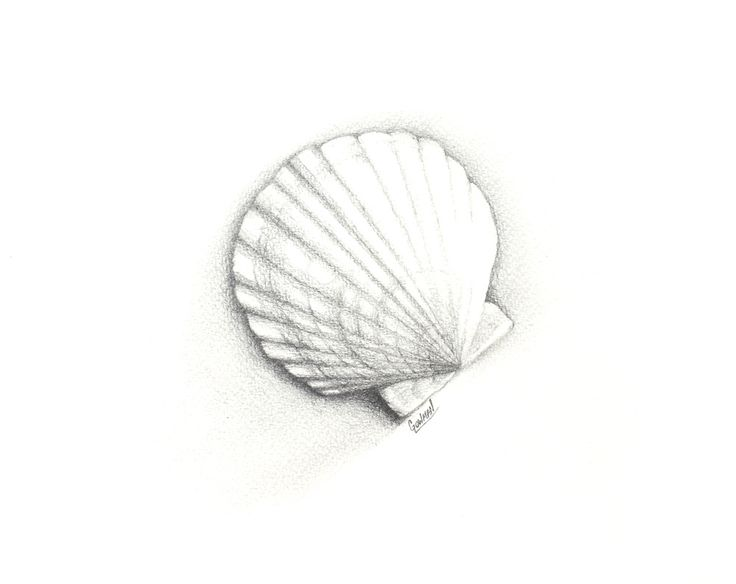153 best Pastors sea shells to draw images on Pinterest ...