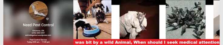 (226) 600-5597 Wild Animal Removal Services   (226) 600-5597 Wild Animal Removal Ontario Canada