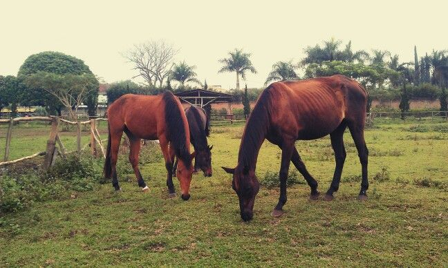 D'Ranch, Lembang