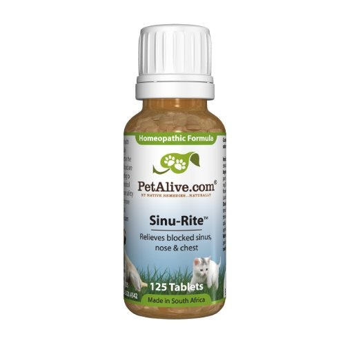 Cat Sinus Infection Natural Treatment