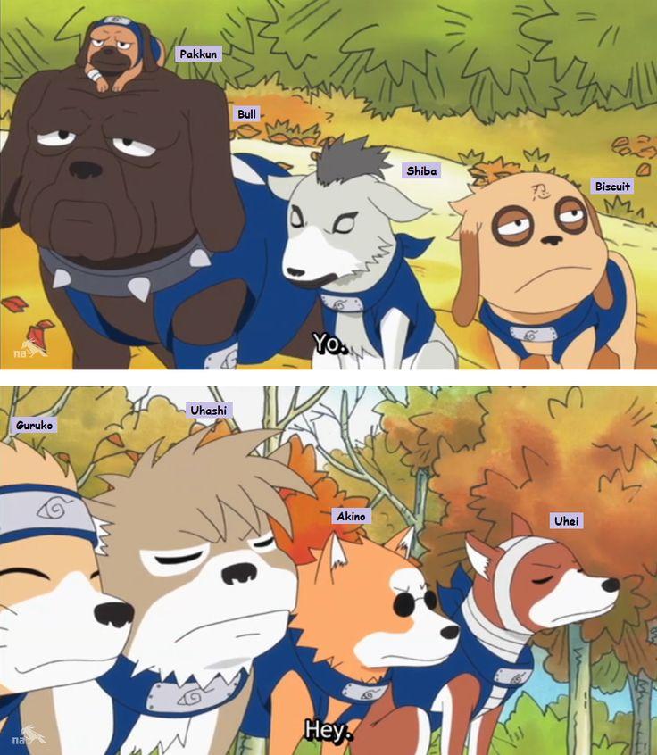 <3 Kakashi's Ninja Hounds: Pakkun, Bull, Shiba, Biscuit, Guruko, Uhashi, Akino, Uhei