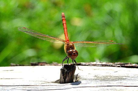 Dragonfly in ZOO by Adéla Kosová