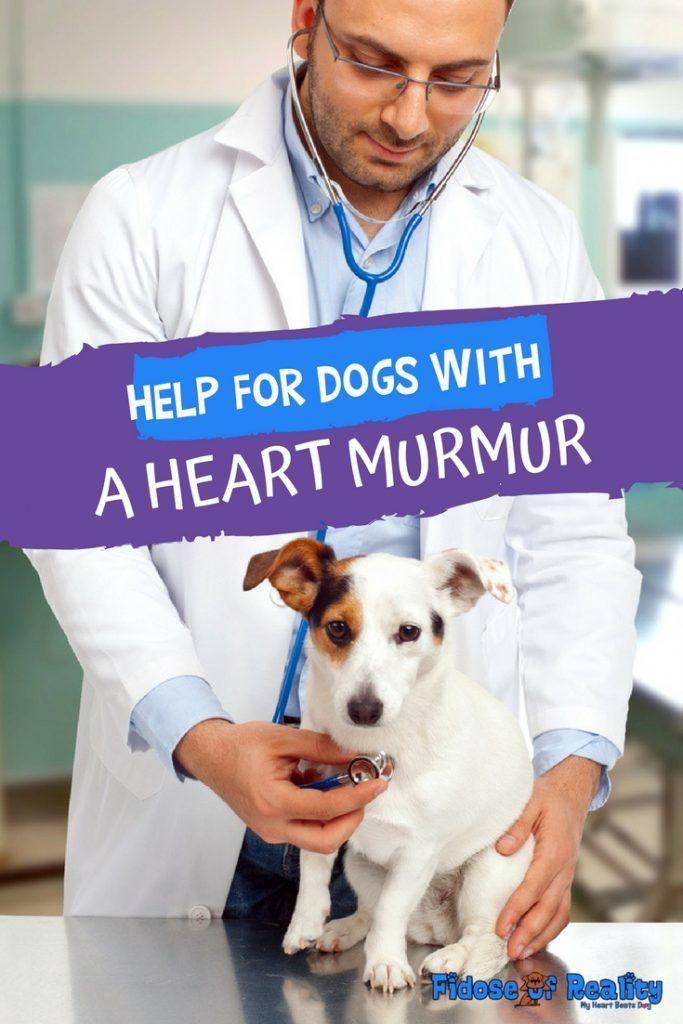 Help For Dogs With A Heart Murmur Heart Murmur Dog Health Care