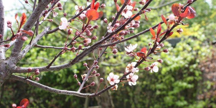TRAVLHED OG HEMMELIGHED - Havefolket - the gardendiaries