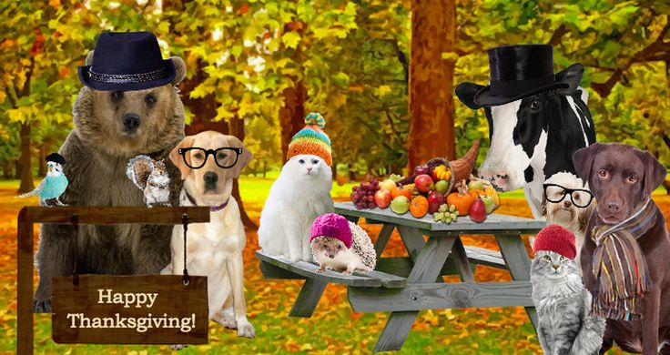 Build your own Thanksgiving ecard like this one. Pick a background, add as many pets as you like (including your own), dress them up and add other fun stuff to the scene!