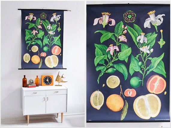 Hey, I found this really awesome Etsy listing at https://www.etsy.com/listing/480577829/vintage-botanical-chart-botanic-school