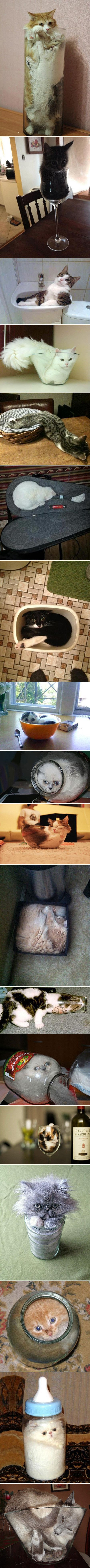 Images of the day -70 pics- Cats Are A Liquid (Compilation)