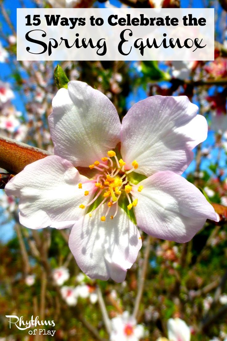 There are many ways to celebrate the spring equinox. Also called the March or vernal equinox, it has long been celebrated as a time of renewal and rebirth.