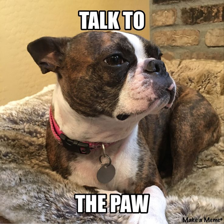 Talk To The Paw! ❤❤❤ from: http://bostonterrierworld.com/talk-to-the-paw/