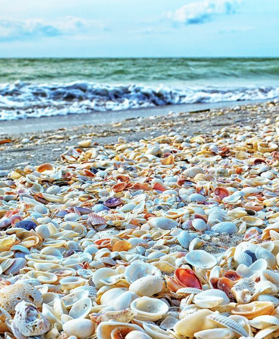 Thousands of shells on Sanibel Island, FL.
