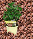 Echter Kaffee & Kaffir-Limette: Top-Qualität kaufen| BALDUR-Garten