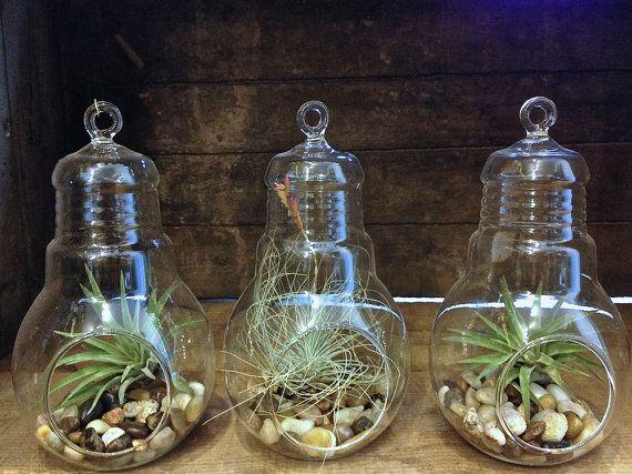 Ampoule claire Terrariums Aquarium plante d