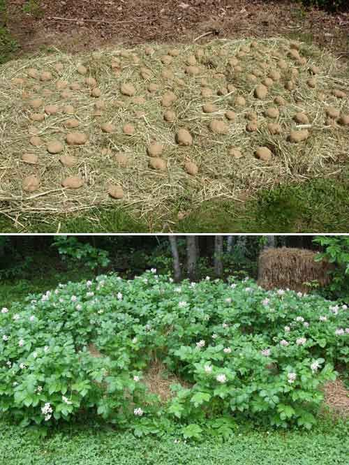 25 Best Ideas About Hay Bale Gardening On Pinterest Straw Bale Gardening Bales Of Straw And