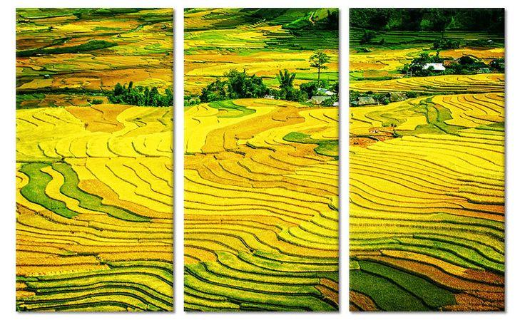 Canvas schilderij geel en groene rijstvelden Vietnam