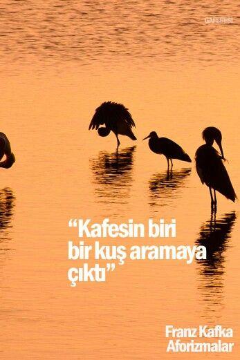 Kafesin biri bir kuş aramaya çıktı. - Franz Kafka / Aforizmalar