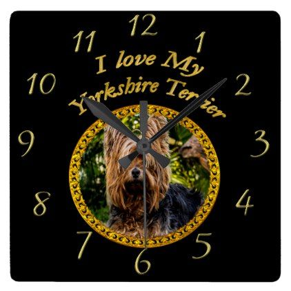 #Sweet Yorkshire terrier small dog Square Wall Clock - #yorkshire #terrier #puppy #terriers #dog #dogs #pet #pets #cute #yorkshireterrier