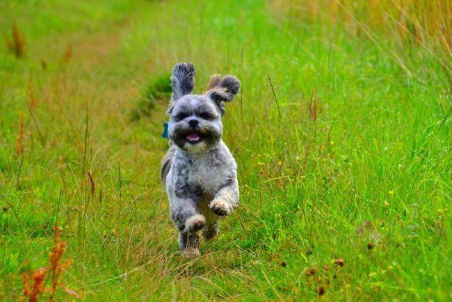 Бегать за мячиком, что-то искать или ловить летающую тарелку собака готова днями напролет. Для нее не бывает слишком много подвижности