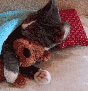 Cutest gif ever: Cat hugging teddy bear