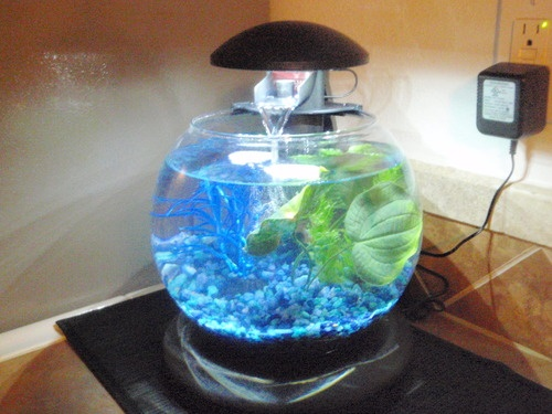 Tetra Waterfall Globe Aquarium Quot I Really Like This Fish