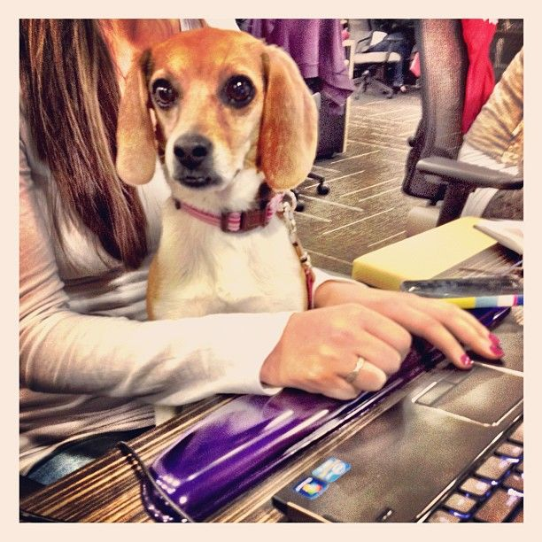 Bring your Dog to work day!: Pet Lovers, Pet Places, Holidays Pet