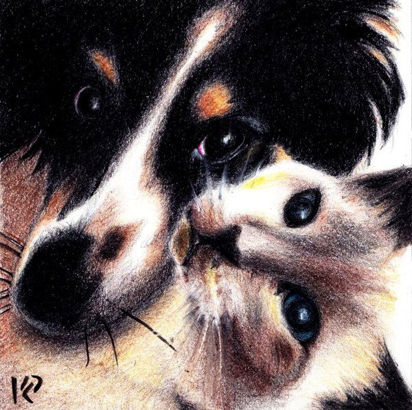 """Dog and Cat Love by spasticlizard on DeviantArt A little bit of """"Awwww...."""""""