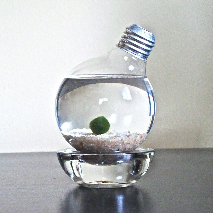A unique and beautiful way to decorate your office. The way the underwater plant turns into a ball is intruiging. MARIMO MOSS BALL LIGHT BULB TERRARIUM | terrarium, lightbulb | UncommonGoods