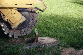 Once a tree is removed, it is advisable to remove the stump from your yard. Stump grinding is the most cost-effective way to remove stumps and reclaim valuable landscape area. DLC grinds stumps four to six inches below grade. Our stump grinders are light and maneuverable, which minimizes damage to your yard.  If you want a new tree for your yard, DLC Arbor Services can help you select the best replacement tree. We will help you choose a tree that has less maintenance, is disease and bug...