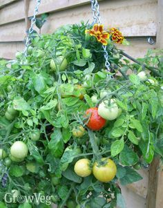How to Grow Vegetables and Fruit in Hanging Baskets
