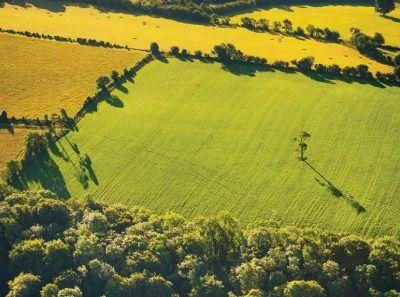 Socios naturales: Por qué los enfoques de la conservación de la naturaleza y del capital natural deberían combinarse | Mercados de Medio Ambiente