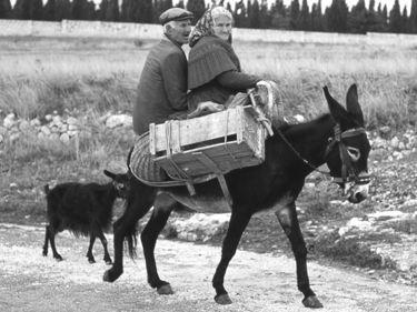 """""""Donkey to Market - 1965, Gargano Italy""""   #TuscanyAgriturismoGiratola"""