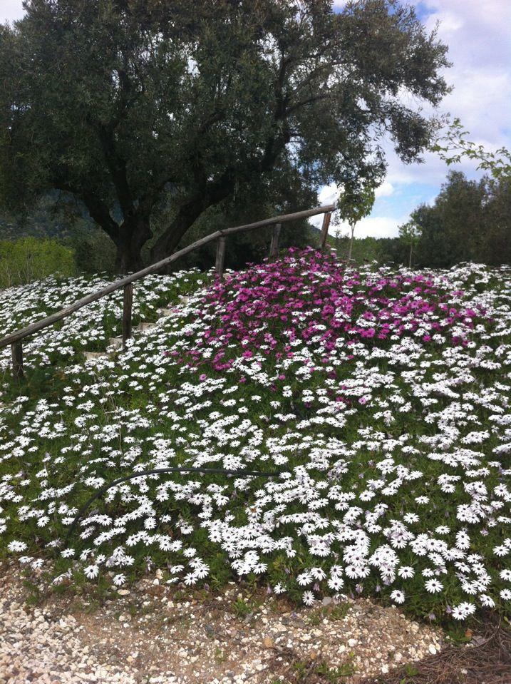 Spring is here! #eleonashotel #greece #evia #rovies #spring #flowers