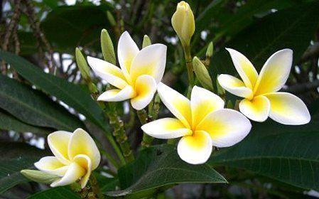 Έλαιο monoi : με δύναμη από την Ταϊτή | Skingurus.gr