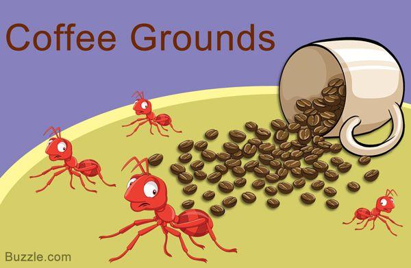 02e5b86188b048a96c481609913d3afa - How To Get Rid Of Ants In Food Cupboard