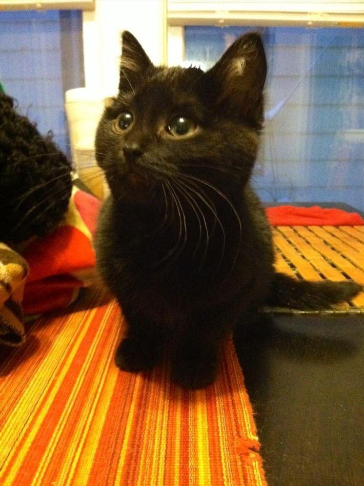 Best 25+ Names For Black Cats Ideas On Pinterest