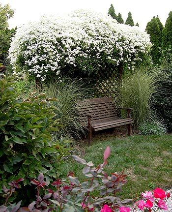Clematis has a reputation as a picky vine to grow, and it can be. But Clematis Montana or Armandii are in a class by themselves. Easy to grow,  vigorous spring bloomers, they are fragrant and evergreen to semi-evergreen. Rugged and breathtaking in bloom, they are loved by butterflies. Don't prune this one unless you have dead wood.   If you do need to prune, do it right after flowering, as they bloom on old growth.