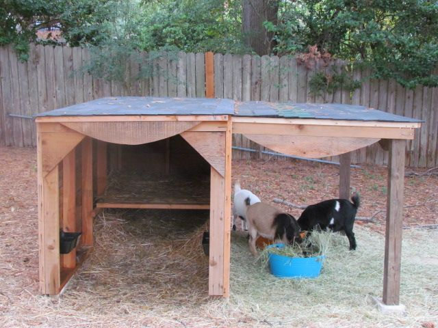 Goat Shelter Plans | Last year I got 4 goats. I didn't realize that letting the goats have ...
