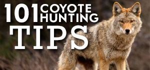 101 Coyote Hunting Tips